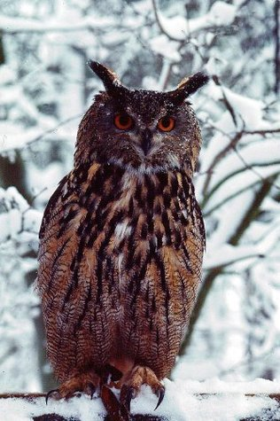 Mozart - the story of a very special owl  by  Jemima Parry-Jones