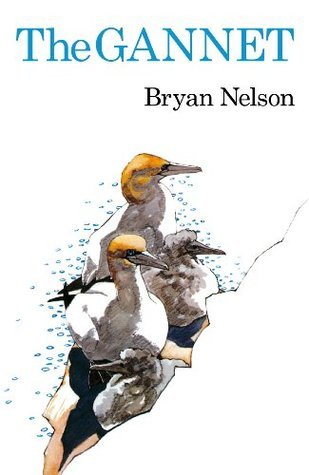 The Gannet (Poyser Monographs)  by  Bryan Nelson