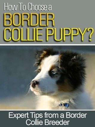 How To Choose a Border Collie Puppy Luther Gordon