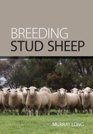 Breeding Stud Sheep  by  Murray Long