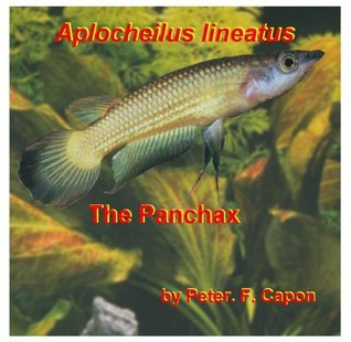 Aplocheilus lineatus  by  Peter.F. Capon