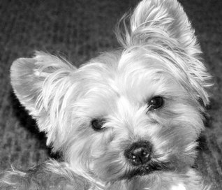THINK LIKE A DOG: NUGGETS, QUIPS and QUOTES HONORING MANS BEST FRIEND  by  Philip Rectra