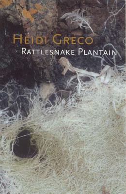 Rattlesnake Plantain  by  Heidi Greco
