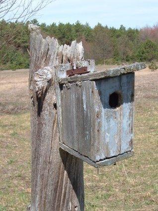 Birdhouses Anyone Can Build Albert F. Siepert