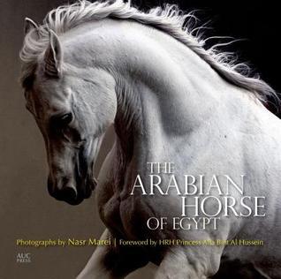 The Arabian Horse of Egypt Cynthia Culbertson