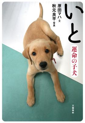 いと―運命の子犬 Maha Harada