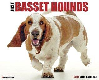 Just Basset Hounds Wall Calendar  by  NOT A BOOK