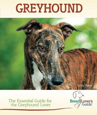 Greyhound Cindy Victor