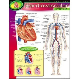Understanding Cardiovascular System Book:Simplified Edition Of Vascular System  by  Hesbon R.M