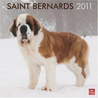 Saint Bernards 2011 Square 12X12 Wall Calendar  by  NOT A BOOK