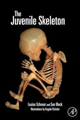 Juvenile Skeleton Louise Scheuer
