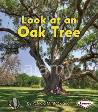 Look at an Oak Tree Patricia M. Stockland
