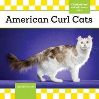 American Curl Cats Stephanie Finne