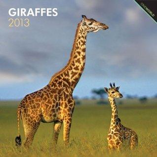 Giraffes 2013 Square 12X12 Wall Calendar NOT A BOOK