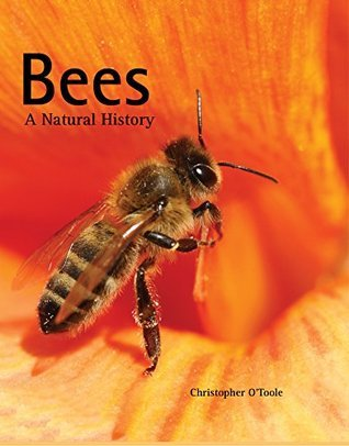 Bees: A Natural History  by  Christopher OToole