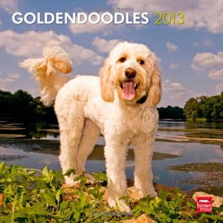 Goldendoodles 2013 Square 12X12 Wall Calendar  by  NOT A BOOK