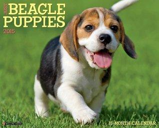 Just Beagle Puppies 2015 Wall Calendar  by  NOT A BOOK