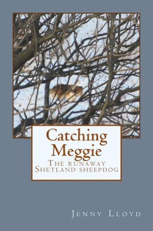 Catching Meggie the Runaway Shetland Sheepdog Jenny   Lloyd