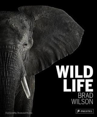 Wild Life Brad Wilson