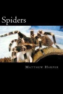 Spiders: A Fascinating Book Containing Spider Facts, Trivia, Images & Memory Recall Quiz: Suitable for Adults & Children Matthew Harper