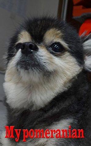 My Pomeranian: Photo Gallery of My Pomeranian Prapaanpong