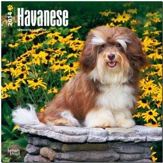 Havanese Calendar  by  NOT A BOOK