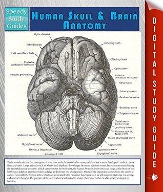 Human Skull And Brain Anatomy  by  Speedy Publishing