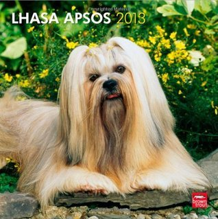 Lhasa Apsos 2013 Square 12X12 Wall Calendar NOT A BOOK