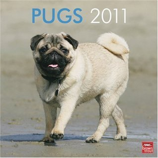 Pugs 2011 Square 12X12 Wall Calendar  by  NOT A BOOK