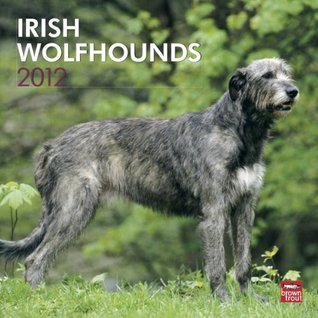 NOT A BOOK Irish Wolfhounds 2012 Square 12X12 Wall Calendar  by  NOT A BOOK