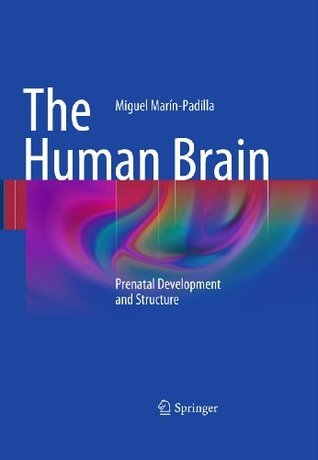 The Human Brain  by  Miguel Marin-Padilla