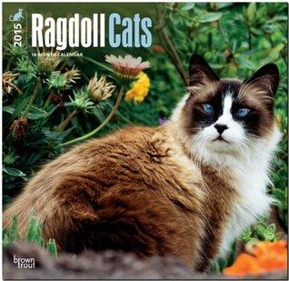 Ragdoll Cats 2015 Square 12x12 NOT A BOOK