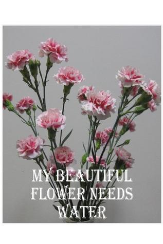My Beautiful Flower Needs Water  by  Van Foster