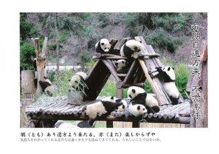 BABY PANDA  by  matsubara hirosi