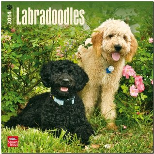 Labradoodles 2014 Wall  by  NOT A BOOK