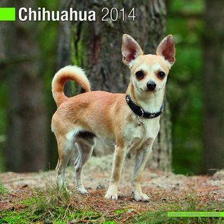 Chihuahua 2014 Wall Calendar  by  NOT A BOOK