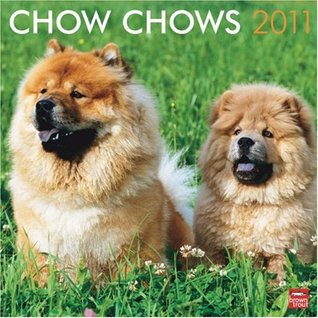 Chow Chows 2011 Square 12X12 Wall Calendar  by  NOT A BOOK
