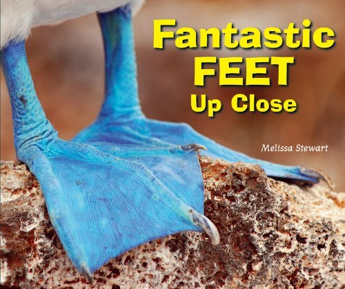 Fantastic Feet Up Close Melissa Stewart