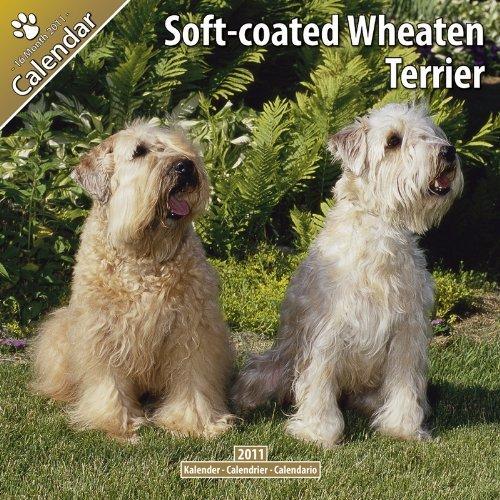 Softcoated Wheaten Terrier 2011 Wall Calendar #10074-11 Pet Prints
