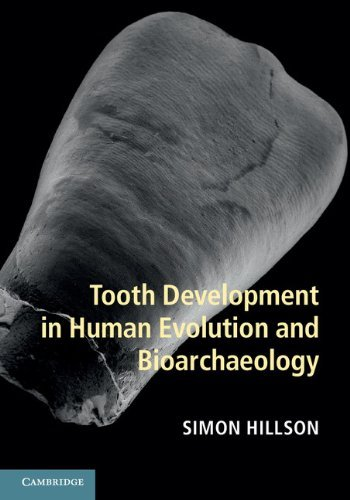 Tooth Development in Human Evolution and Bioarchaeology  by  Simon Hillson