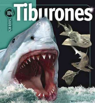 Tiburones / Sharks  by  Beverly McMillan