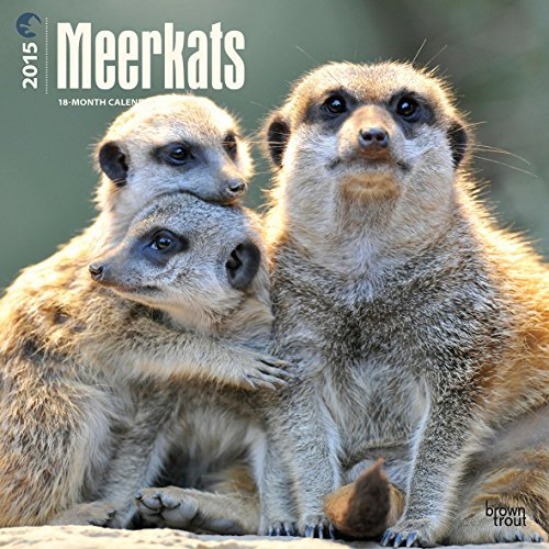 Meerkats 2015 Wall Calendar  by  BrownTrout Publishers Ltd.