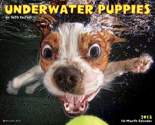 Underwater Puppies Calendar Seth Casteel