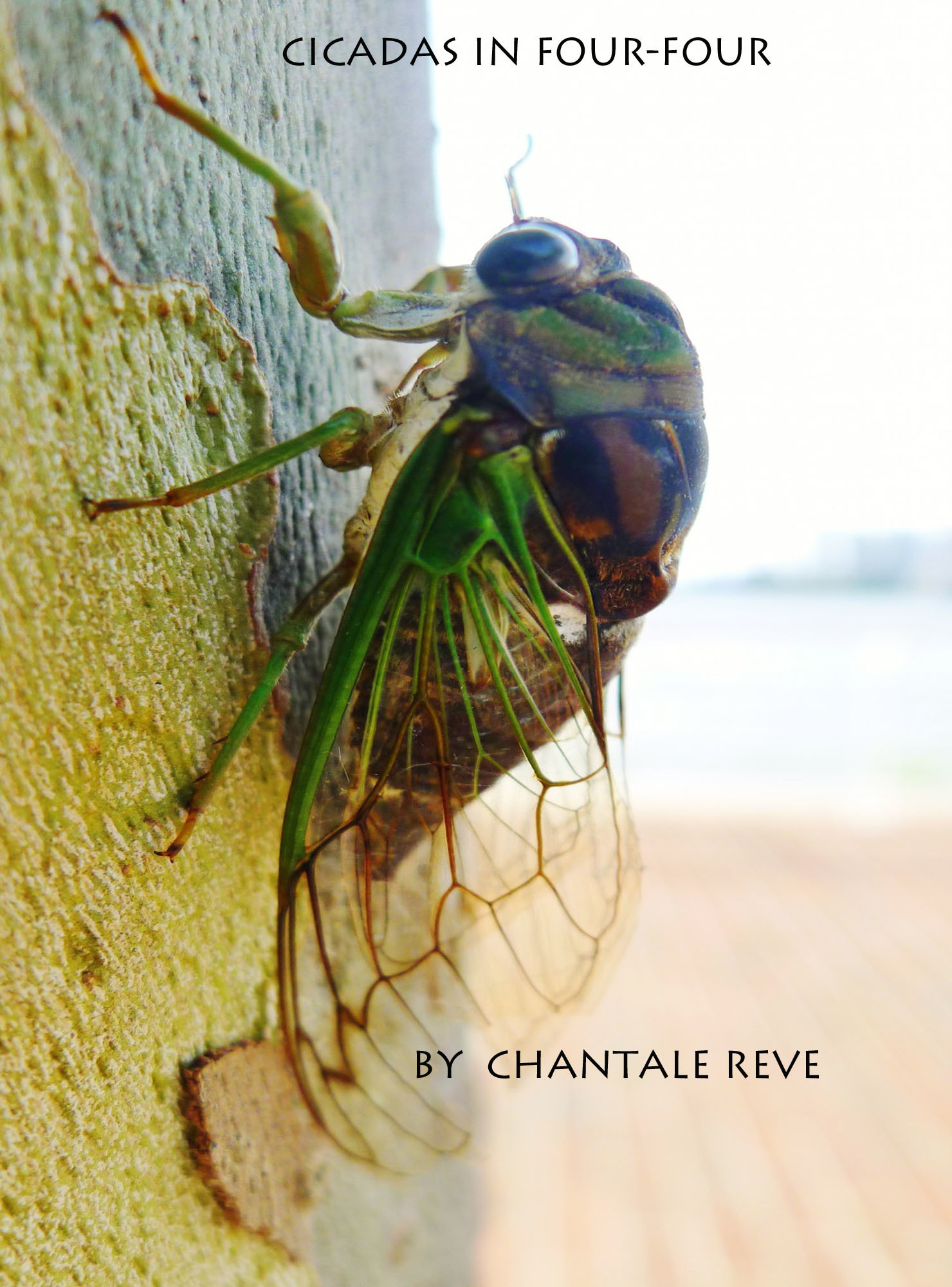 Cicadas in Four-Four  by  Chantale Reve