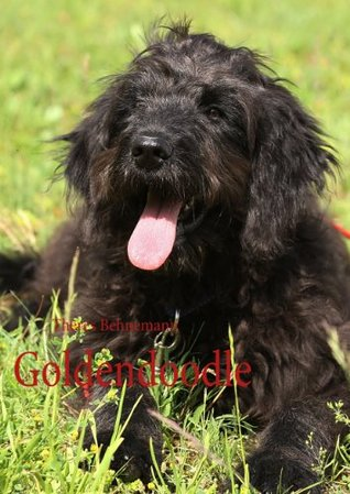 Goldendoodle  by  Theres Behnemann