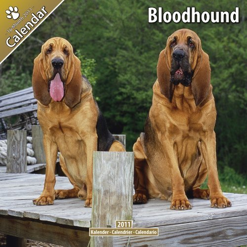 Bloodhound 2011 Wall Calendar #10017-11  by  Pet Prints