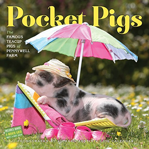 Pocket Pigs Wall Calendar 2016: The Famous Teacup Pigs of Pennywell Farm Richard Austin