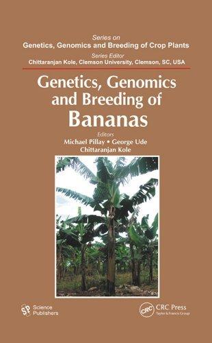 Genetics, Genomics, and Breeding of Bananas (Genetics, Genomics and Breeding of Crop Plants)  by  Michael Pillay