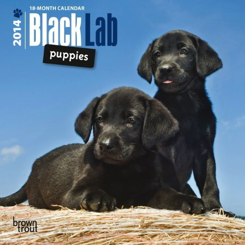 Black Lab Puppies 18-Month 2014 Calendar NOT A BOOK