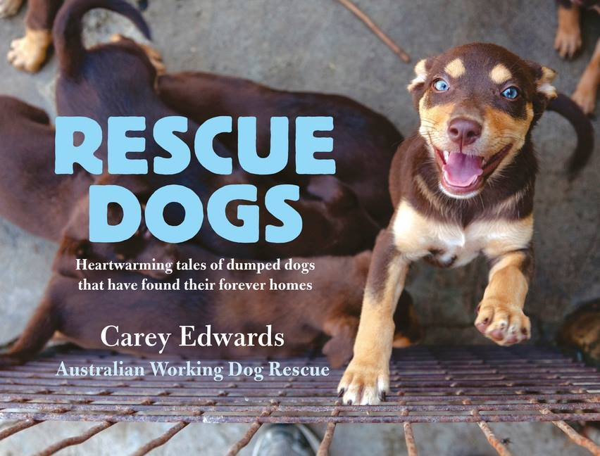 Rescue Dogs  by  Carey Edwards